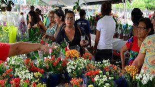 Festival das Flores de Holambra será realizado no Recife