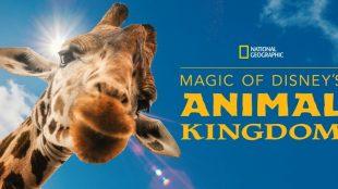 Disney lança série sobre os  bastidores do parque Animal Kingdom